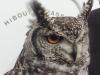 Visite d\'un fauconnier : mars 2020